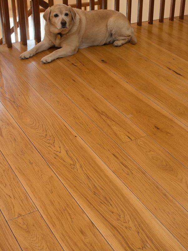 dog sitting on hickory wide plank flooring