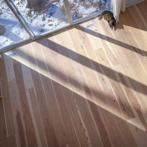 cat laying in sun on hardwood flooring